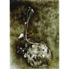 Courtil XI , photographie de Marie-Louise BRÉHANT